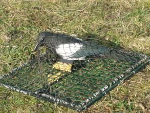 Le filet de capture d'oiseaux