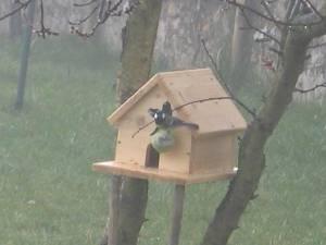comment construire une maison de petits oiseaux le bricolage de a z. Black Bedroom Furniture Sets. Home Design Ideas