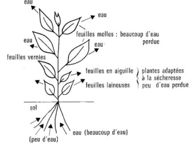L'eau et la plante
