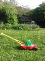 La tonte de pelouse