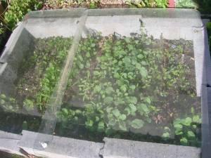 Semis en châssis couvert
